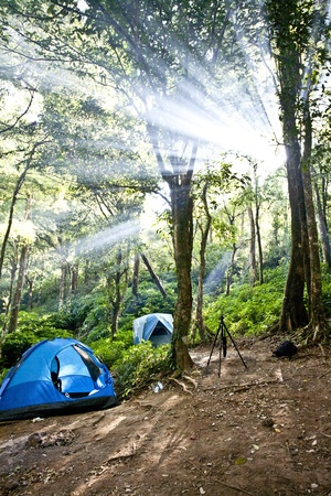 Camping tents in forest photo