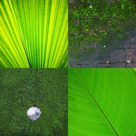 remix: Remix green eco texture background