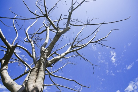 Dead tree on blue sky