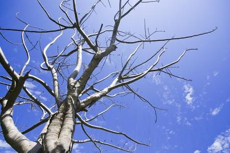 Árbol muerto en el cielo azul