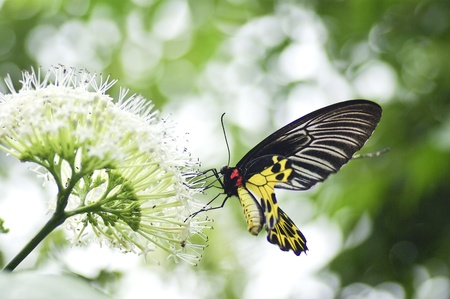 Yellow black butterfly in the nature Stock Photo - 15154187