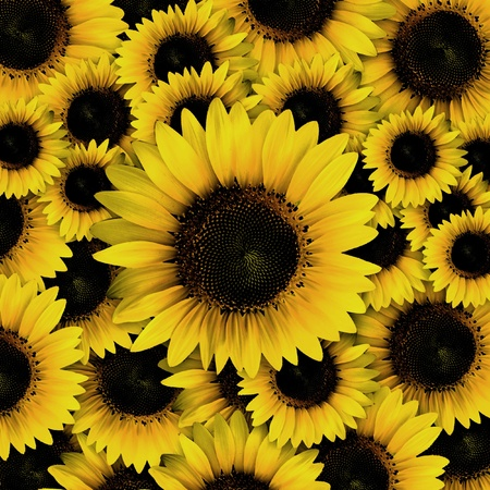 yellow stamens: dark yellow Sunflower petals closeup patterns background