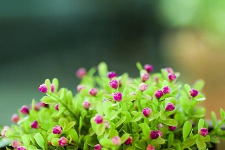 Little flower Stock Photo - 15390707