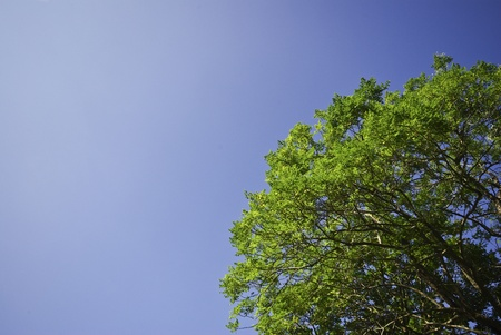 Green tree on blue sky Stock Photo - 15390649