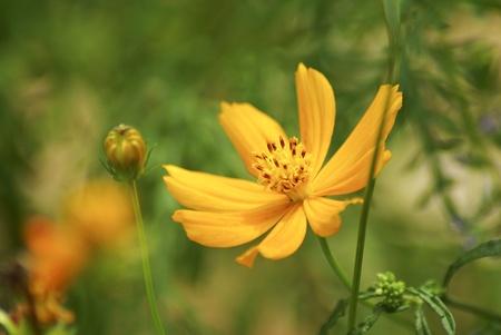 Yellow flowers Stock Photo - 15390729