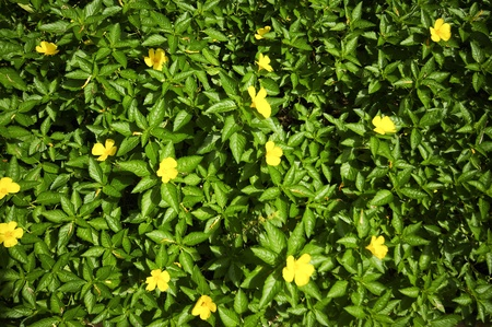Yellow flower on green grass Stock Photo - 15374783