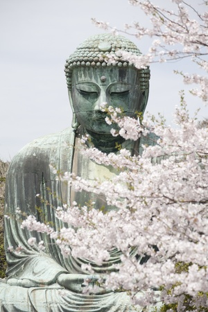 KAMAKURA - APRIL 13   Close up great buddha with sakura foreground in Kotoku-in Temple on April 13, 2012 in Kamakura, Kanagawa, Japan