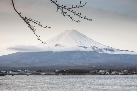 First Cherry Blossom with Mt Fuji photo