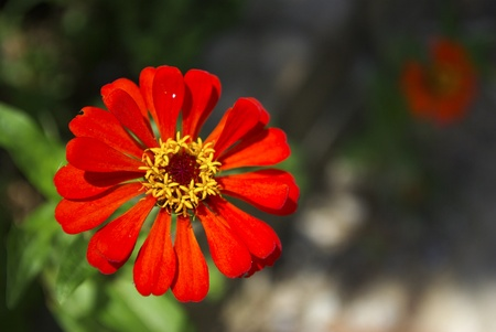 Fresh red flower Stock Photo - 17182314
