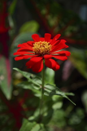 Fresh red flower Stock Photo - 17182313