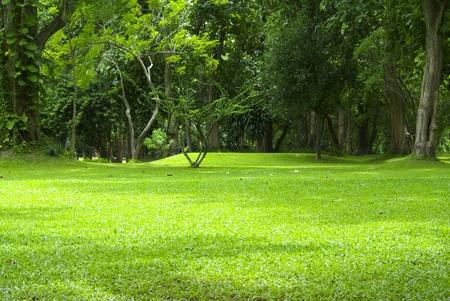 show garden: Garden green grass