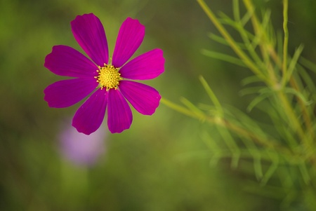 A Purple Flower Stock Photo - 17182309