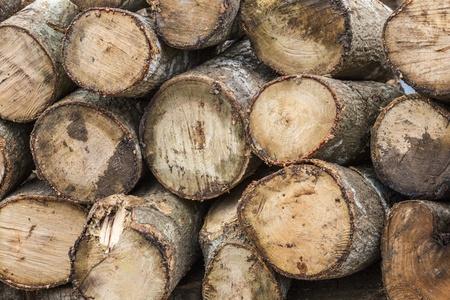 wood log: Wood log
