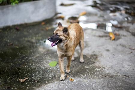 vagabond: Dog