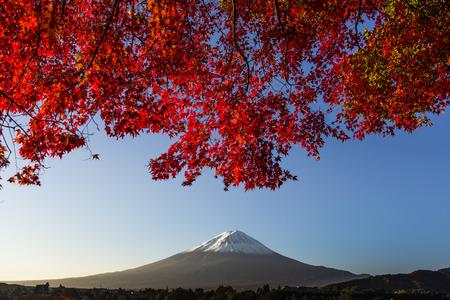 saiko: Mount Fuji with red autumn leaf  Japan