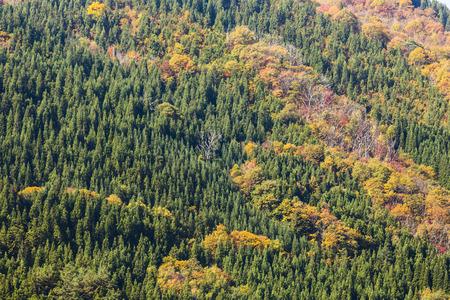 ogimachi: Fall season at Shirakawa-go. Japan