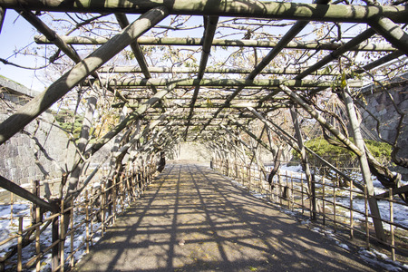 sc: Tree tunnel at Hakodate  Japan Stock Photo