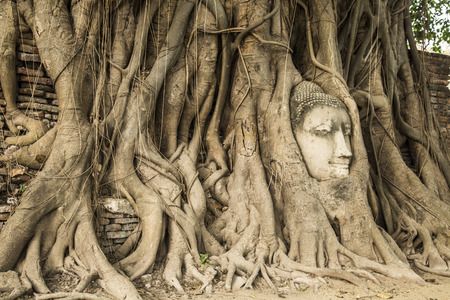 Head of Sandstone Buddha in The Tree Roots at Wat Mahathat, Ayutthaya, Thailand photo