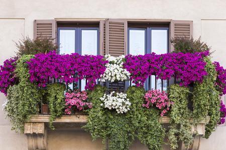 Violette bloemen pot op balkon Rome. Italië
