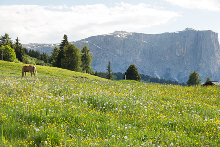 dolomite: Image of horse on Lankoffel mountain range. View from Seiser Alm, Dolomites, Italy. Stock Photo