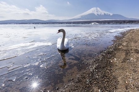 mt fuji: Mt. Fuji winter season shooting from Lake Yamanaka. Yamanashi, Japan