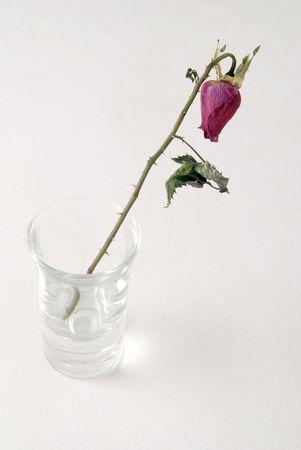sapless: Piccolo fiore rosa secca in piedi vuoti di vetro