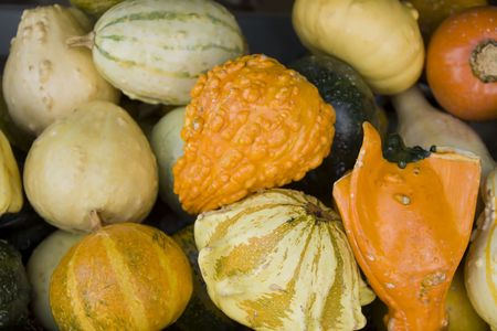 Fall harvest of assorted squash on display.