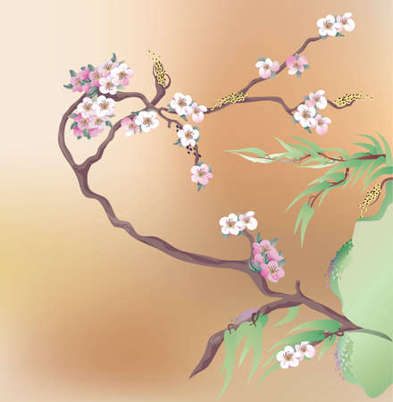 oriental ethnicity: Japanese cherry in Bloom   Illustration