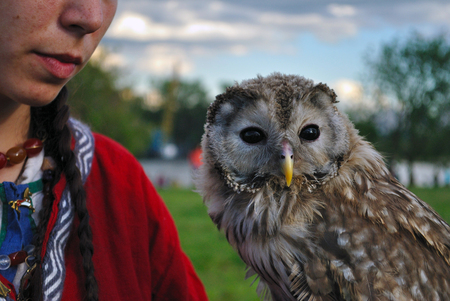 domesticated: Domesticated Owl Stock Photo