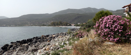 Mediterranean panorama with flowering bush on a rocky beach, sea and mountains in Greece Stock Photo