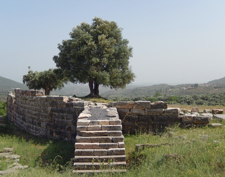 Olive trees on an ancient archaeological site in Kalamata, Greece