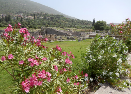 ���archeological site���: Pink oleander with blossoming flowers on an archeological site background in Greece