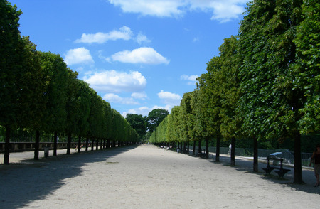 trimmed: Classic walk amongst formally trimmed trees in Tuileries Garden, between the Louvre Museum and the Place de la Concorde in Paris, France Editorial