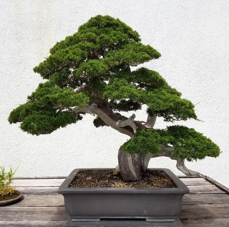 Paisaje Bonsai y Penjing con el árbol de hoja perenne en miniatura en una bandeja Foto de archivo - 65037184
