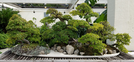 rock garden: Bonsai and Penjing landscape with rocks and miniature trees in a tray Stock Photo