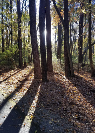 Autumn with trees against the sun, projecting long shadows in a park.