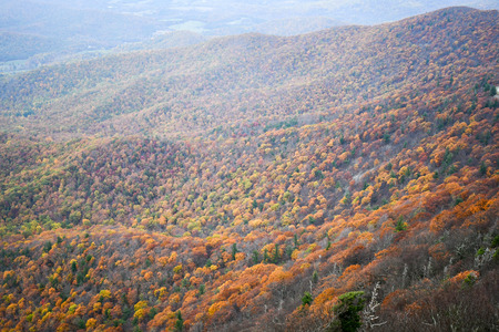 Aerial view of the Shenandoah Valley mountains covered by forests in bright autumn colors