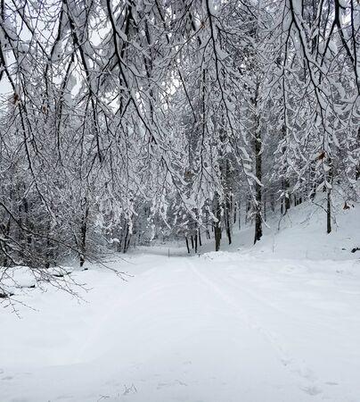 Bosque congelado con ramas de árboles y ramitas cubiertas de nieve y hielo para fondos de vacaciones de invierno. Foto de archivo