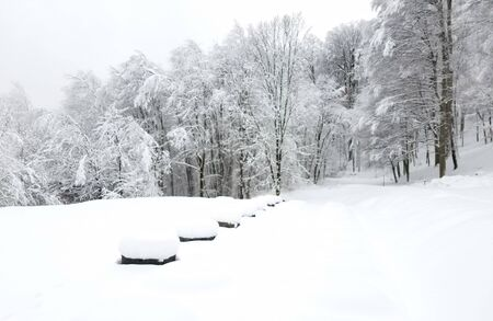 Winter landscape with a park in a wooded area with sculptures and trees covered in ice and snow