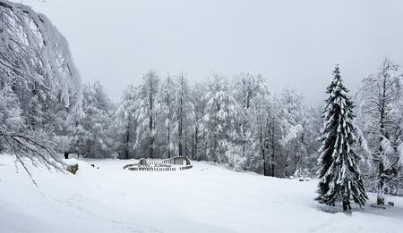 Frozen forest panorama with trees covered in heavy snow and ice for winter holiday backgrounds.