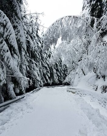 Road winding through a frozen forest covered in snow for winter holidays backgrounds Фото со стока