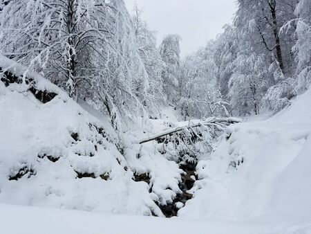 Frozen forest with trees covered in heavy snow and ice for winter landscape backgrounds.