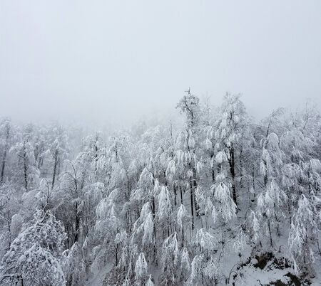 Frozen forest with trees covered in heavy snow and ice for winter holiday backgrounds.