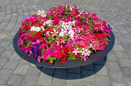 Floral background with petunias in a landscape planter on a cobblestone street.