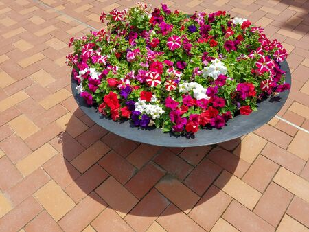 Red, white and purple petunias in a flower planter on a ceramic tiled patio for landscapes and floral backgrounds. Zdjęcie Seryjne