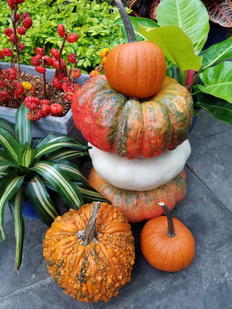 Stack of ripe, colorful pumpkins for October and November holiday backgrounds in autumn.