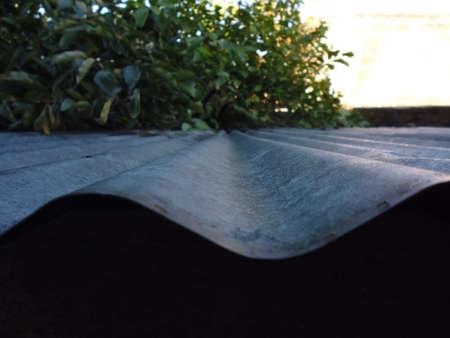 亜鉛シートのチャネル上のイチジクの木のビュー