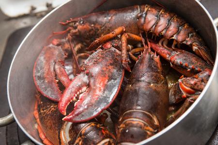 lobster pots: Red lobster steaming in pot on hob
