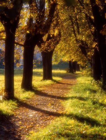 Soft focus image of autumn avenue in a decline light Banque d'images