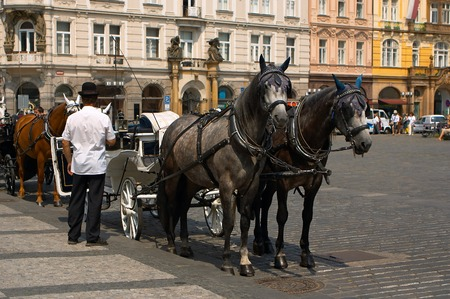Two horses and the carrier at the Old tows Square in Prague 스톡 사진